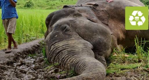 Alertan sobre la proximidad de la sexta extinción masiva