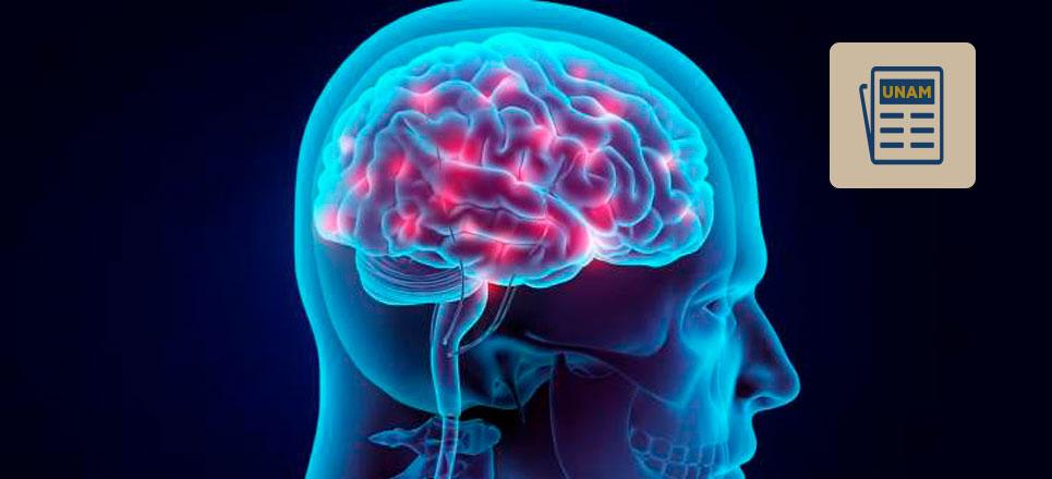 La hipoglucemia y sus consecuencias en el cerebro