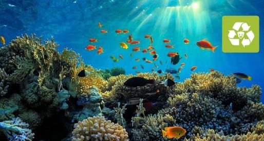 Conoce el proyecto de Biodiversidad Marina de Yucatán