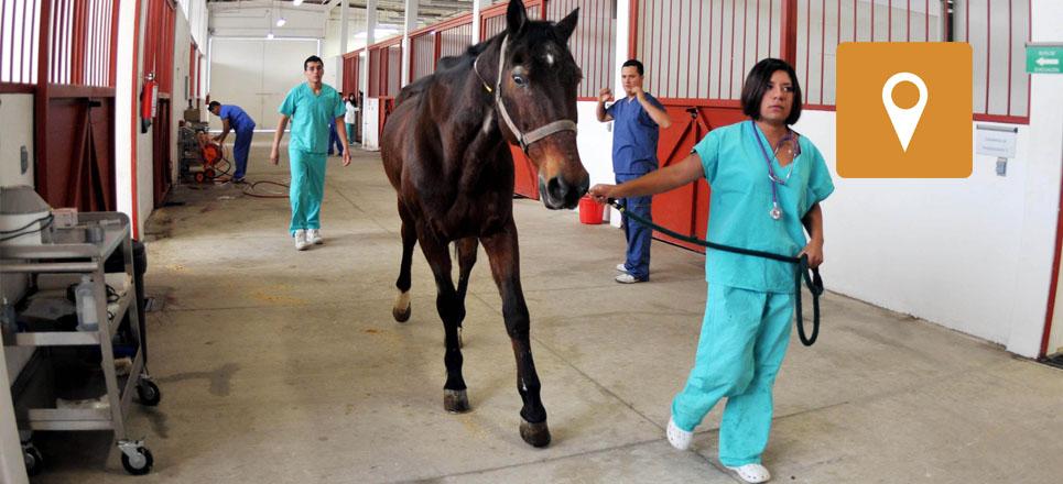 ¿Sabías que la UNAM cuenta con un hospital para equinos?