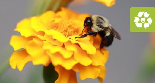 Abre la exposición Vínculos invisibles. Polinizadores y biodiversidad