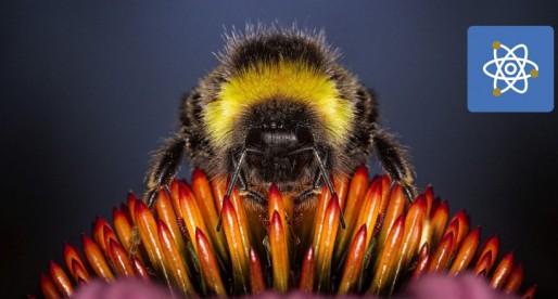 Diseñan extractor de veneno de abeja que las protege