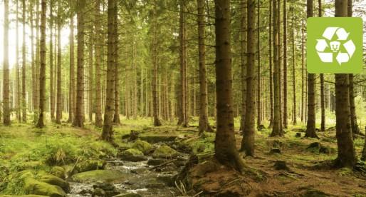 Árboles, fundamentales para la vida
