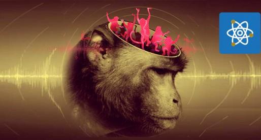Científicos de la UNAM descubren que macacos pueden seguir ritmos