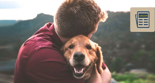 Perros, capaces de interpretar emociones de sus dueños
