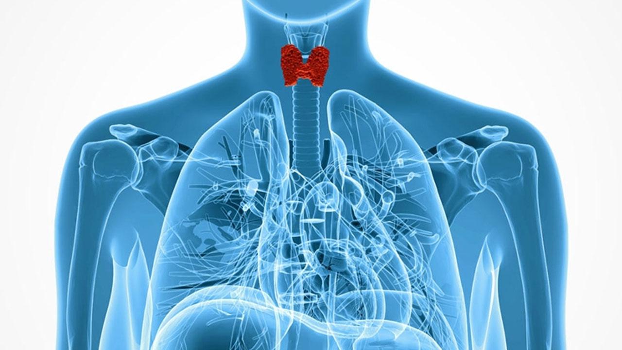 tiroides_contenido1