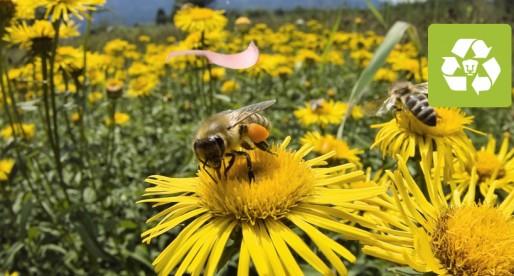 Si las abejas desaparecen, la mitad de las plantas del planeta morirían