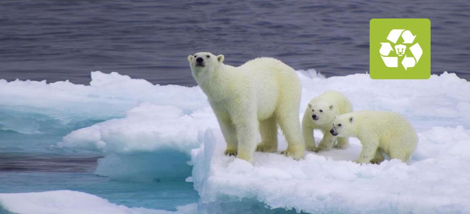 Animales no logran adaptarse al cambio climático