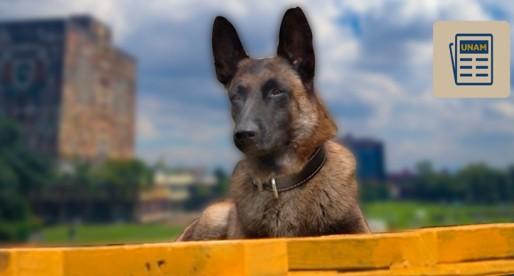 Comunidad universitaria cuenta con 30 perros de rescate