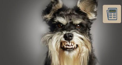 ¿Te imaginas que tu perro sienta celos? Pues eso sí es posible