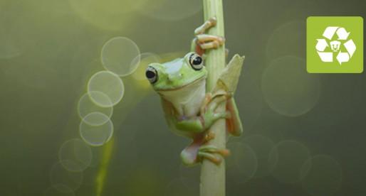 Alertan sobre un declive de las poblaciones de anfibios