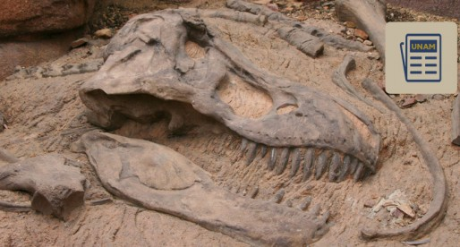 ¿Sabías que los huesos fósiles de dinosaurios revelan algunas de sus enfermedades?