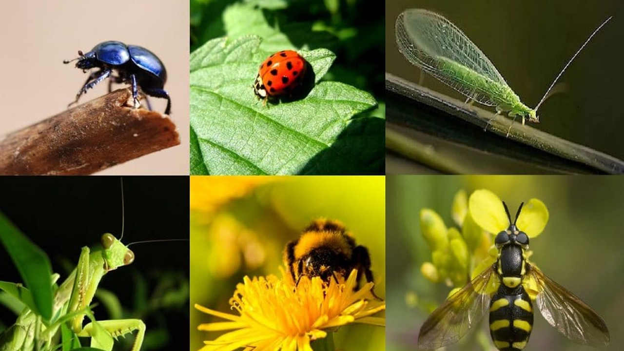 insectos_contenido1