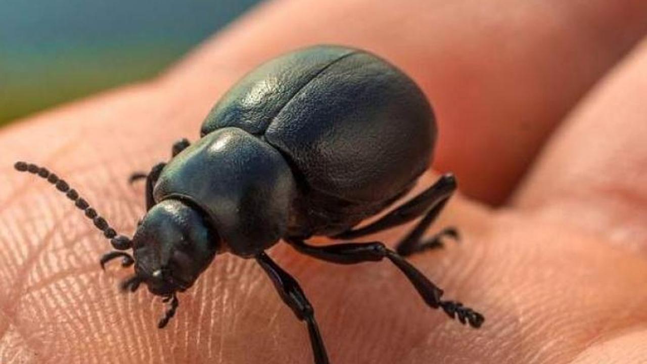 insectos_contenido2