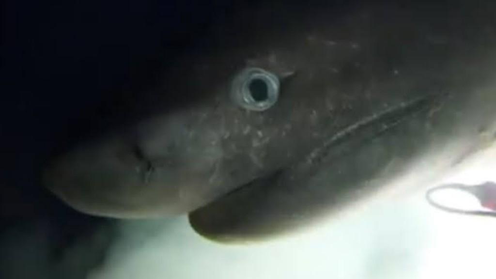tiburon_contenido1