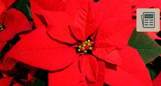 Nochebuena, de México para el mundo