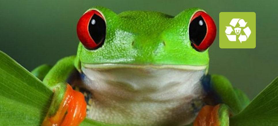 En peligro de extinción, más de la mitad de anfibios en México
