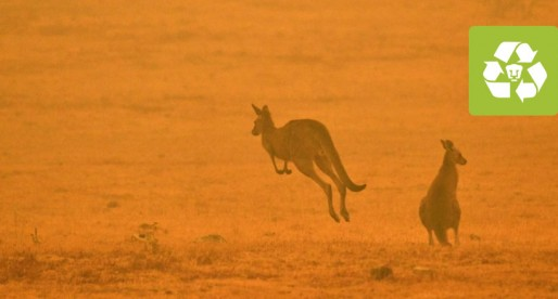 Más de mil millones de animales muertos a causa de incendios en Australia