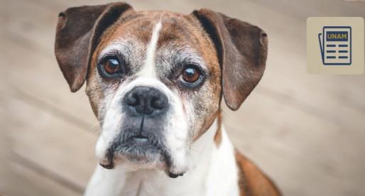 Esterilización, la mejor forma de prevenir enfermedades para tu perro