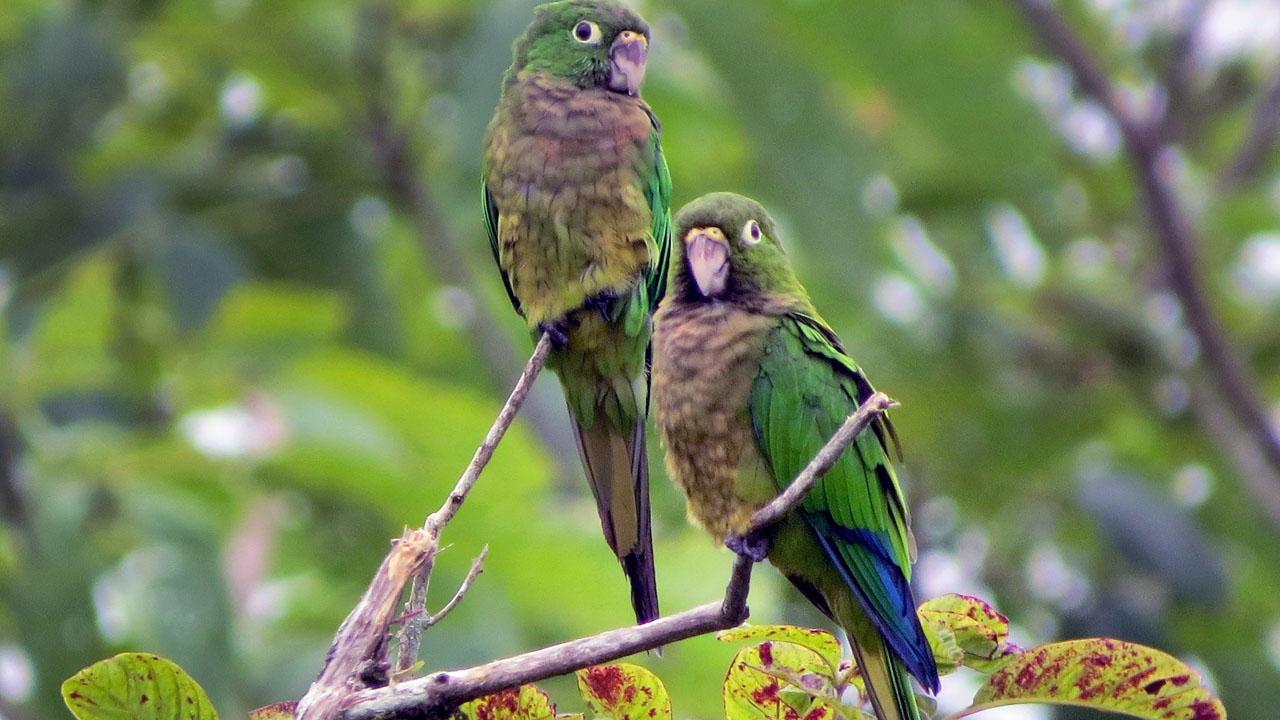 aves_contenido2